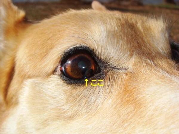 犬の食糞は解消できる!簡単にやめさせる5つの対 …
