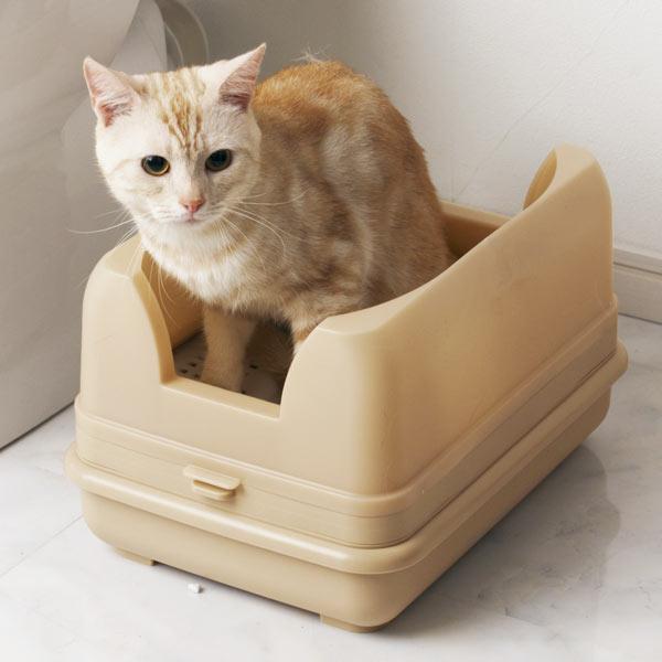 猫のトイレが上手くいかず困っている人へのアドバイス