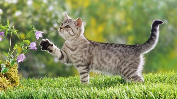 猫用品の次世代便利グッズを画像で7つご紹介