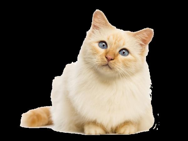 猫の絵ってどう描くの?子供に教えたい7つのテクニック