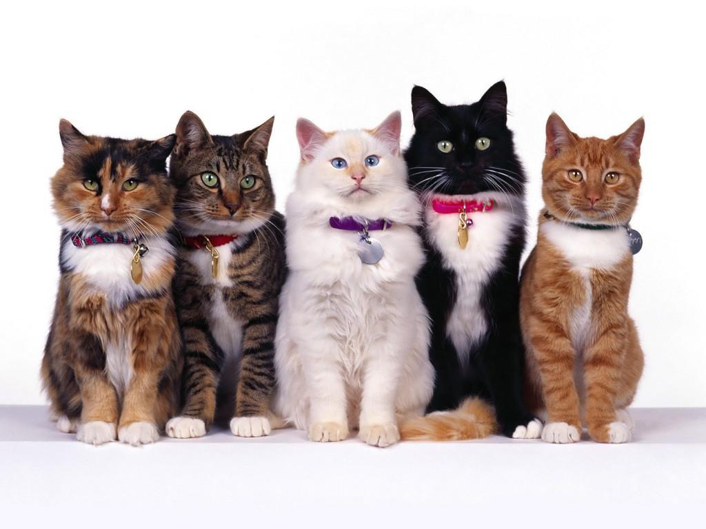 猫の日は猫にまみれる一日に。厳選画像集めました