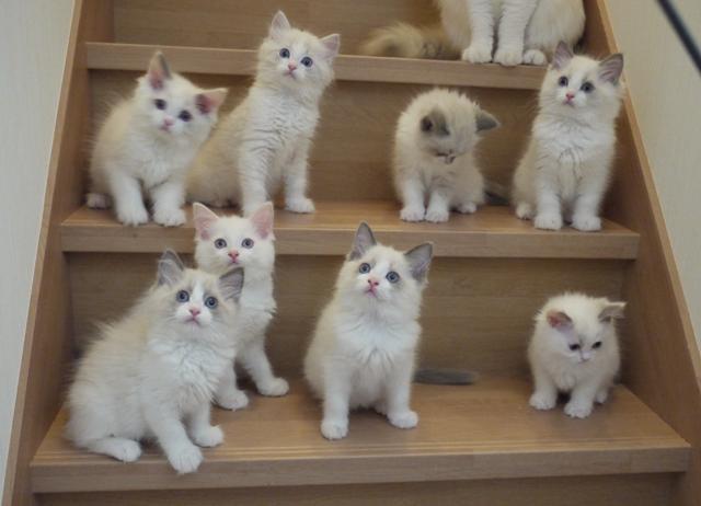 猫の画像!とってもかわいい子猫達にフォーカスしました♪