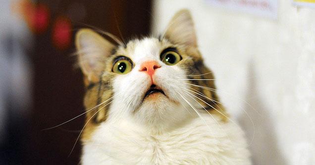 猫好きにはたまらないちょっとかわった画像大公開★