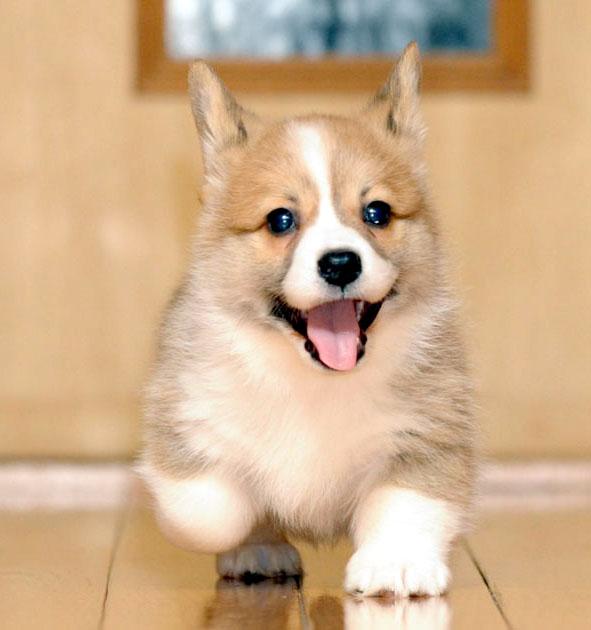 子犬の上手な育て方☆飼う前に知っておきたい情報まとめ