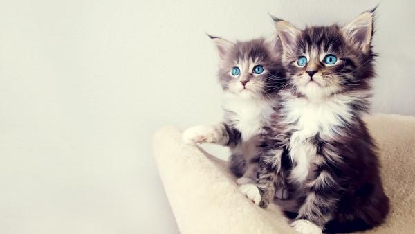 猫の値段を種類別に徹底公開!