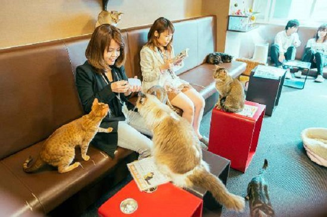 猫カフェへ行きたいあなたへ!関東で絶対おススメ7店舗