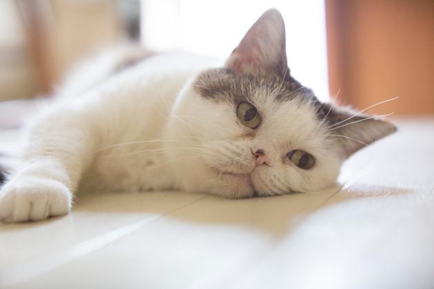 猫の血便が出たときに注意するべき4つのポイント