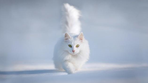 猫と散歩するときに気をつけるべき5つのコト