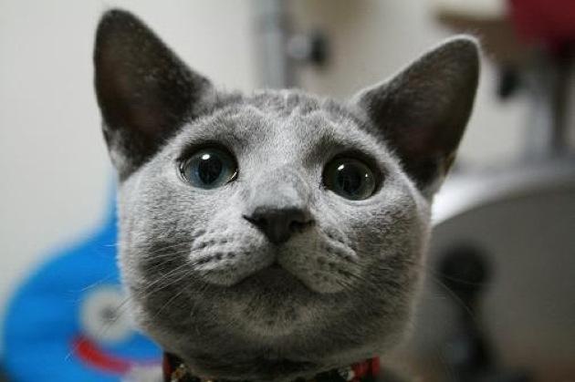 猫が咳をしたときに知っておくべき基本の知識