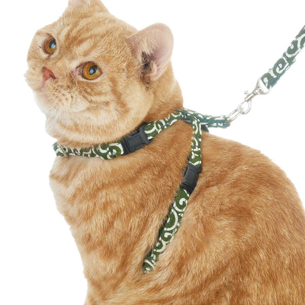 猫の散歩がしたい人におすすめのハーネスとは