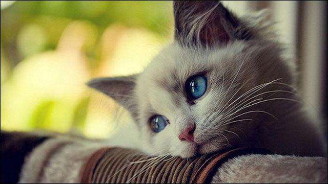 猫の咳に隠された7つの病気とその治療法