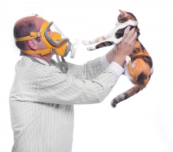 猫アレルギーを克服するために試してほしい生活改善法