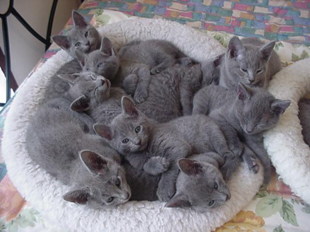 猫を多頭飼いにするなら試してほしいハートケア