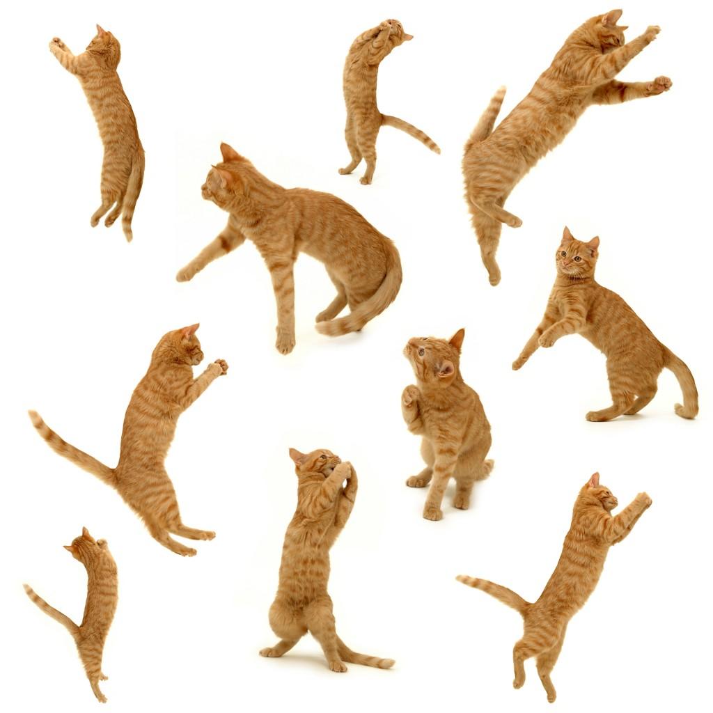 youtubeに猫動画をアップする時に気をつけたい4つの注意点