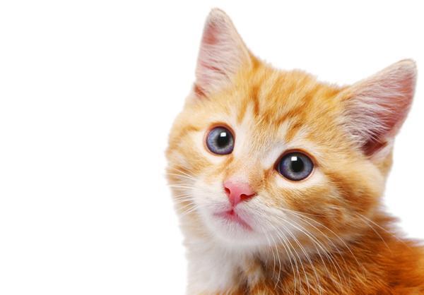 猫エイズにかかったペットとの関わり方、3つのヒント!