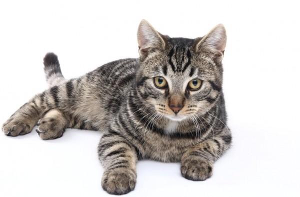 猫をずっと抱っこしていたい人へ、上手な抱き方教えます☆