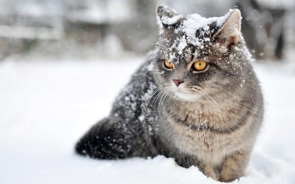 猫はこたつで丸くなるとは限らない!