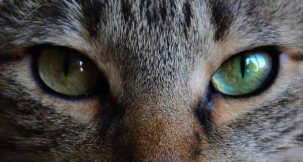 ネコ科の動物☆あれもこれも!かわいすぎる画像集