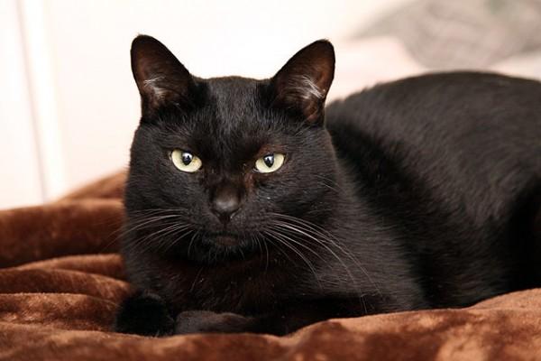 猫にノミがつかないように気を付けておきたい5つの習慣