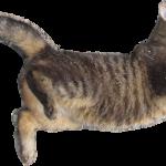 猫の寿命を延ばすためにやってあげたい5つのこと