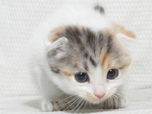猫エイズを知りたい!原因や症状、予防法などの豆知識