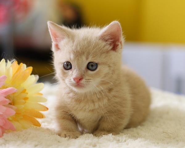 猫の飼育方法、絶対押さえたい基本7ステップ