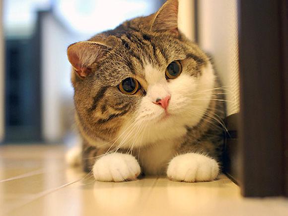猫が鼻水を出したときに注意してほしい5つのコト