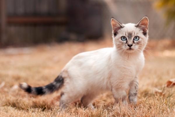 猫の風邪に隠された、知らないと怖い病気の種類