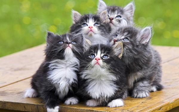 猫の日にはやっぱり猫!癒され画像11選!!
