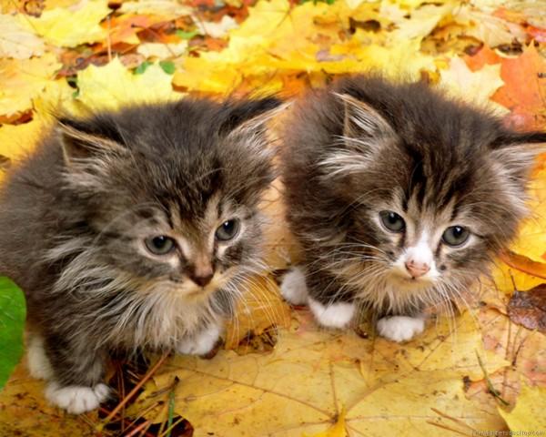 秋の散歩は気持ちいいね