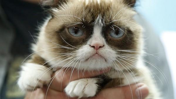 猫エイズの症状を知って愛猫を病気から守る方法とは