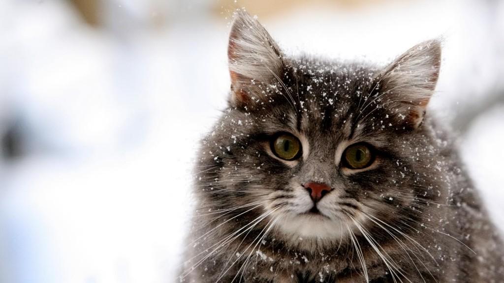 愛猫のノミがひどいときの症状とその対処法