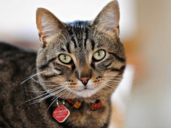 猫の下痢、対処法と注意すべき危険な症状とは?