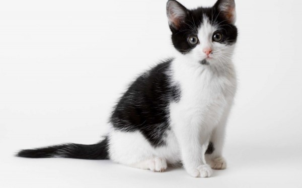 猫の年齢や性格によって変えたい接し方まとめ