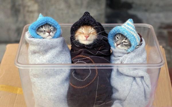 寒いっすねー、そーっすねー。