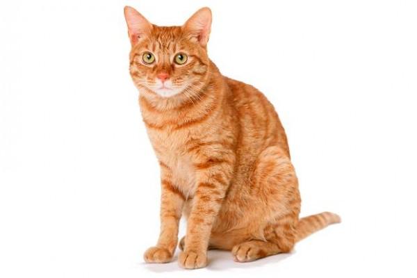 猫グッズを通販するならココだ!お薦め雑貨屋7選
