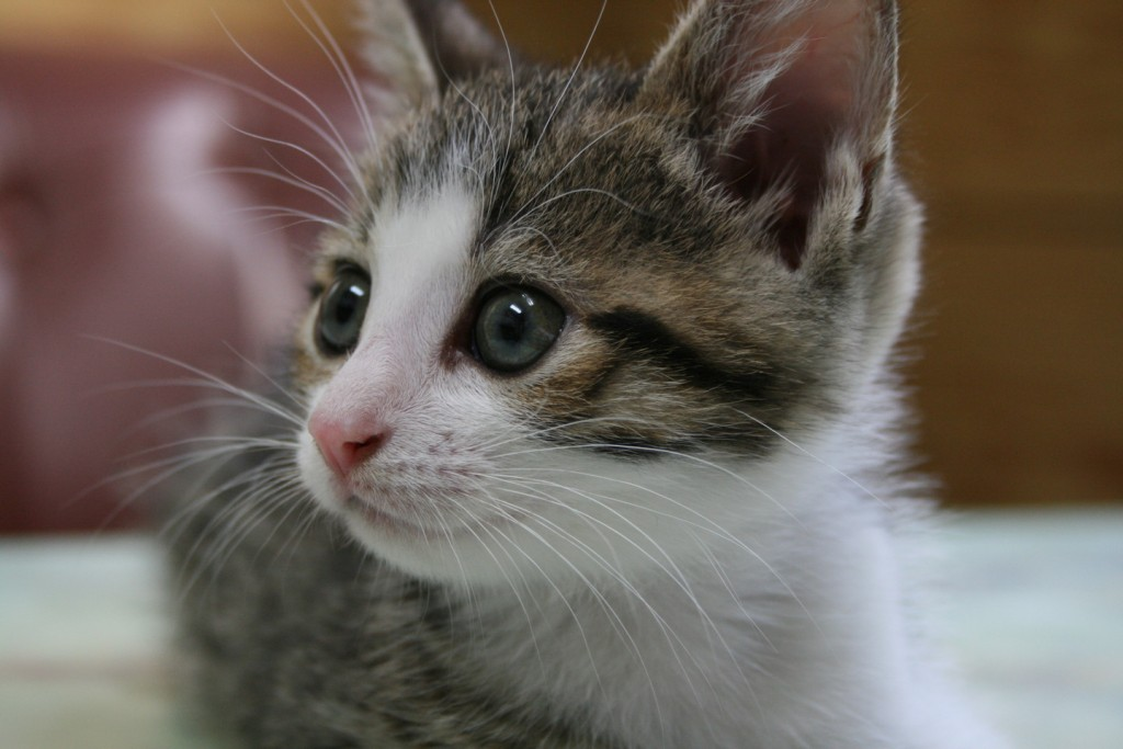 猫ってかわいい☆大好き!そんな人へキュンキュン画像11選