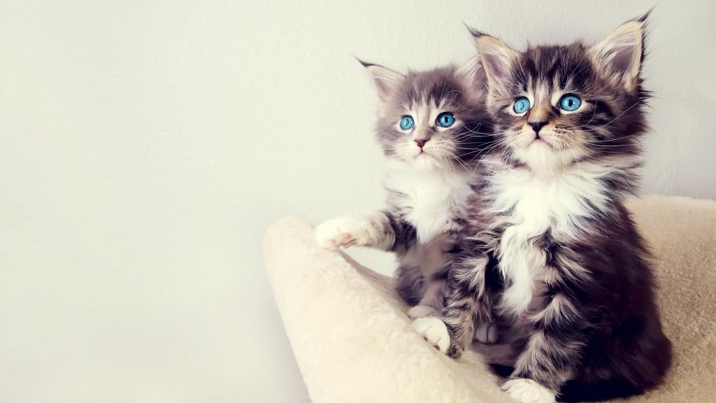 猫の風邪を甘く見てこじらせないでほしい7つのこと