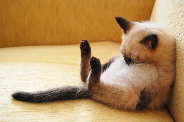 猫が鼻水を出したときにやってあげたい対処法