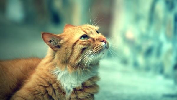 猫の目やにに注意するべき5つの事とは