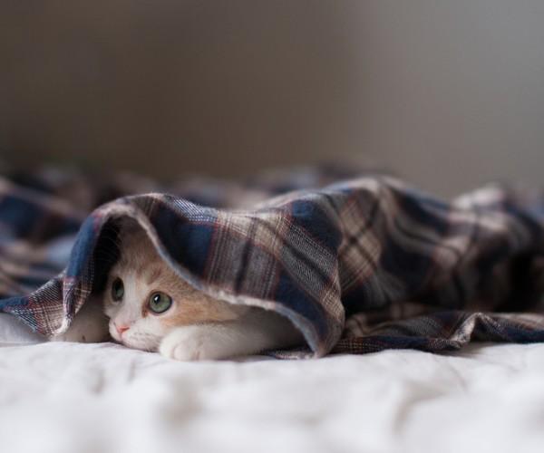 もう朝?まだ出たくないな……