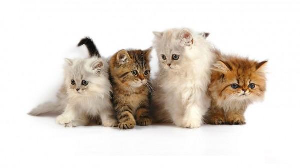 猫を多頭飼いする時に気を付けたい7つの事とは