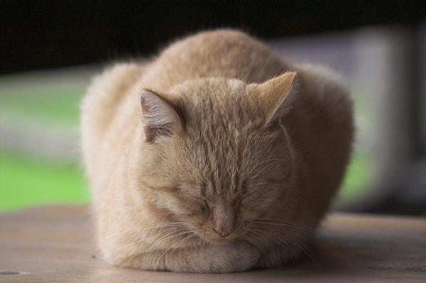 可愛い猫の壁紙、待ち受け☆永久保存級!癒やし画像まとめ