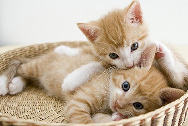 子猫の里親募集をするなら☆引き渡すまでの4つの注意点