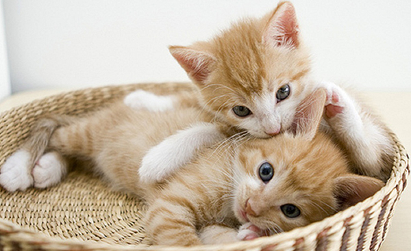 可愛い猫に癒やされたい貴方必見!13のオススメ厳選画像