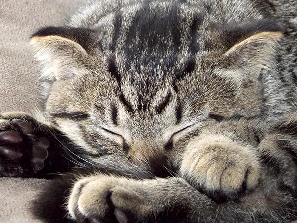猫のペット保険どこにしよう?後悔しない為の賢い選び方