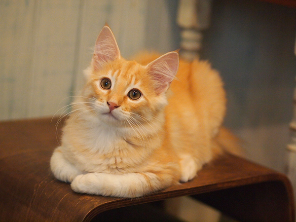 猫のかわいい画像大特集☆おちゃめな瞬間をまとめて紹介!