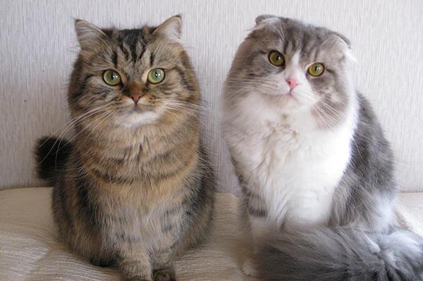 猫のブリーダーになるには☆知っておきたい資格・情報