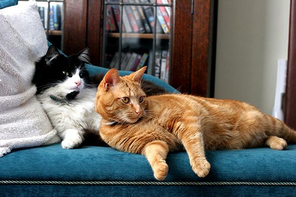 猫の寿命を伸ばして、長生きさせてあげたい!3つの秘訣