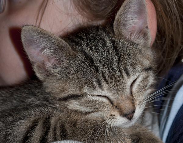 猫の寿命を延ばす為に、飼い主が毎日気をつけたいこと☆